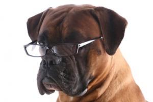 A dog wears glasses.