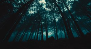 Divorce finance pictured as navigating through a dark forrest during nightime with tall trees silhouetted in view.